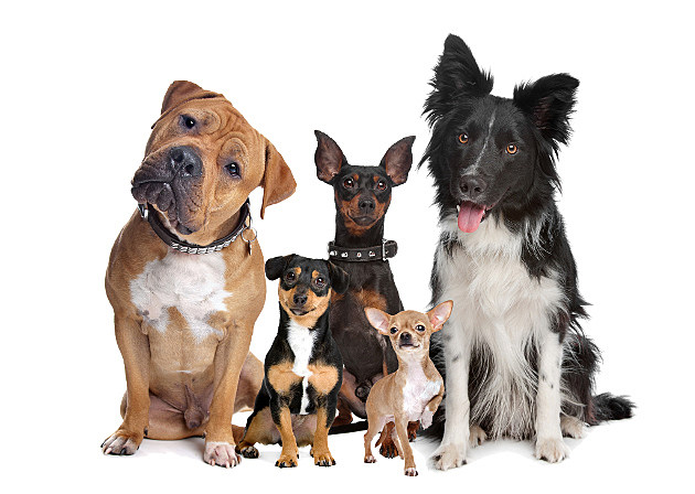 group of five dogs sitting in front of a white background